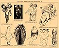 Brockhaus and Efron Encyclopedic Dictionary b68 923-0.jpg