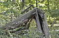Broken tree 03.jpg