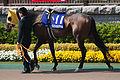 Buena Vista (horse).jpg