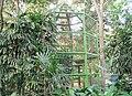 Burung Taman Hutan Raya Ir. Djuanda Dago Bandung - panoramio.jpg
