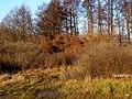 Bydgoszcz - opuszczony cmentarz ewangelicki przy ul Smętnej 10 i Nastrojowej14 - panoramio.jpg