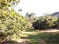 CACHOEIRA DO RONCADOR - panoramio.jpg