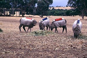 Methanogenesis - Testing Australian sheep for exhaled methane production (2001), CSIRO