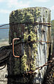 CSIRO ScienceImage 4079 Moss growth on gatepost entrance to rural property Canberra ACT.jpg