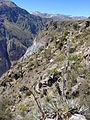Cañon del Colca - Peru 04.jpg