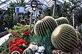 CactusAllanGarden.JPG