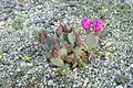 Cactus à Salsberry.JPG