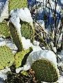 Cactus Snow - panoramio.jpg