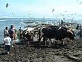 Caleta Duao - panoramio (3).jpg