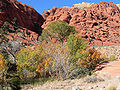 Calico Basin Ash Creek Spring 3.jpg