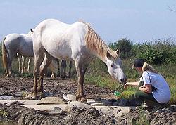 Wild Horse in Italy