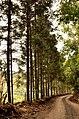 Camino - panoramio (42).jpg