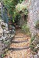 Camino del Salticón 3.jpg