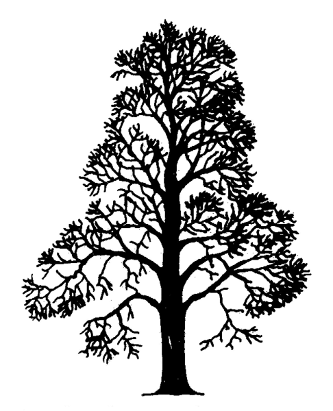 Bestand:Castanea sativa Silhouette (oddsock).png
