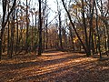 Catherine Chevalier Woods Forest Preserve - panoramio.jpg