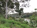 Centenary Bridge seen from Chelmer, Queensland.jpeg