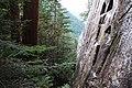 Cestou pod 3. štít - panoramio.jpg