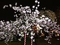 """Cherry-Blossom-Viewing through the """"Tunnel"""" at Japan Mint in 201504 050.JPG"""