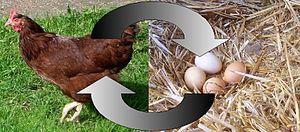 Le cycle de l'oeuf et de la poule