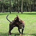 Chihuahua 2.JPG