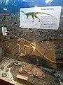 Chilesaurus diegosuarezi.jpg