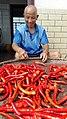 Chili picking.jpg
