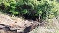Chittanda Chola Forest Dam - panoramio (8).jpg
