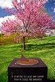 "Cincinnati - Spring Grove Cemetery & Arboretum ""Springtime"" (8709736614).jpg"