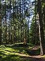 Clearing with tree stump in Gullmarsskogen ravine 1.jpg