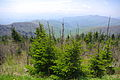 Clingmans-dome-spruce-fir-tn2.jpg