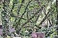 Cmentarz żydowski 0062.jpg