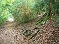 Cockshot Wood, White Hill - geograph.org.uk - 1396376.jpg