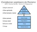 Constitution septenairen de l'homme.png