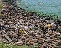 Contaminacion del Lago de Maracaibo.jpg