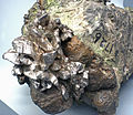 Copper and silver (Mesoproterozoic, 1.05-1.06 Ga; Calumet and Hecla Mine, Calumet, Upper Peninsula of Michigan, USA) 1 (16691610774).jpg