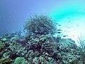 Coral scene 21 (7342864850).jpg