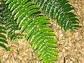 Costa Rica (6094231843).jpg