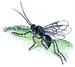 White Butterfly Parasite Wasp - Photo Heinrich von Schubert et al., no known copyright restrictions (public domain)