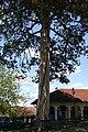 Crkva Uspenja Bogorodice, Petnica 010.jpg