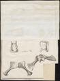 Crocodilus galeatus - 1700-1880 - Print - Iconographia Zoologica - Special Collections University of Amsterdam - UBA01 IZ12200092.tif