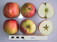 Cross section of Sylvia, National Fruit Collection (acc. 1976-019).jpg