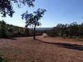 Cuatro Caños camino a Mirandilla - panoramio.jpg