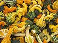 Cucurbita pepo ornamental gourds IMG 5520.jpg