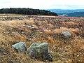 Cup marked rock, Bingley Moor - geograph.org.uk - 44666.jpg