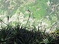 Curral das Freiras, Madeira - May 2008 (7).jpg