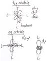 D-orbitals.png
