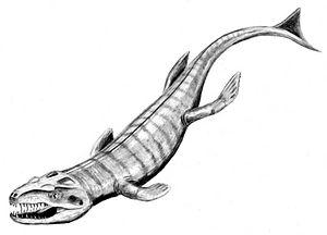 Metriorhynchidae - Dakosaurus andiniensis