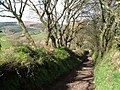 Dartmoor Way approaching Dickford Bridge - geograph.org.uk - 163061.jpg