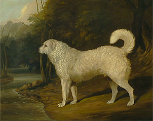 Portrait of a Dog, Ro