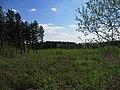 Deciduous saplings amid conifers, Hague's wood - geograph.org.uk - 406414.jpg